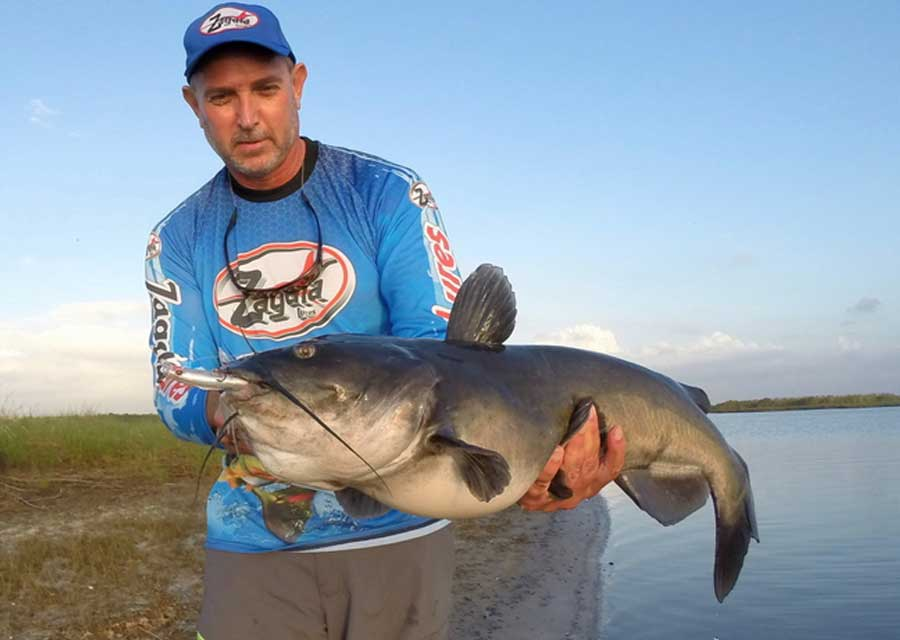 Catfishing the St  Johns River – SpaceFish