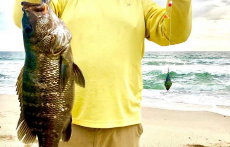 cubera snapper caught surf fishing