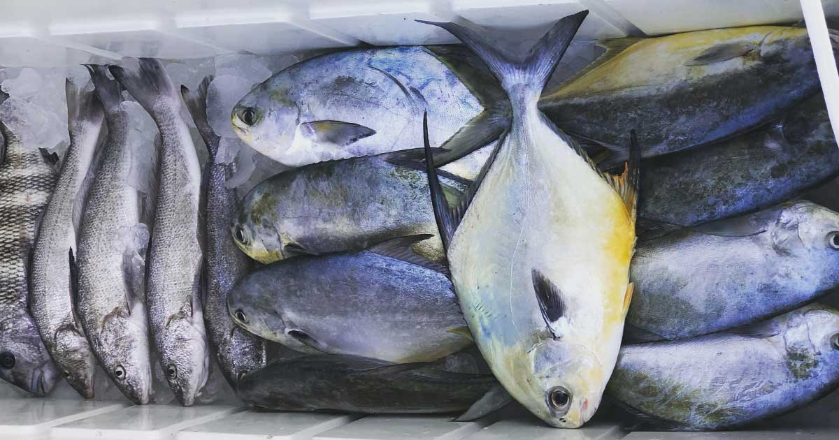 Pompano season is arriving