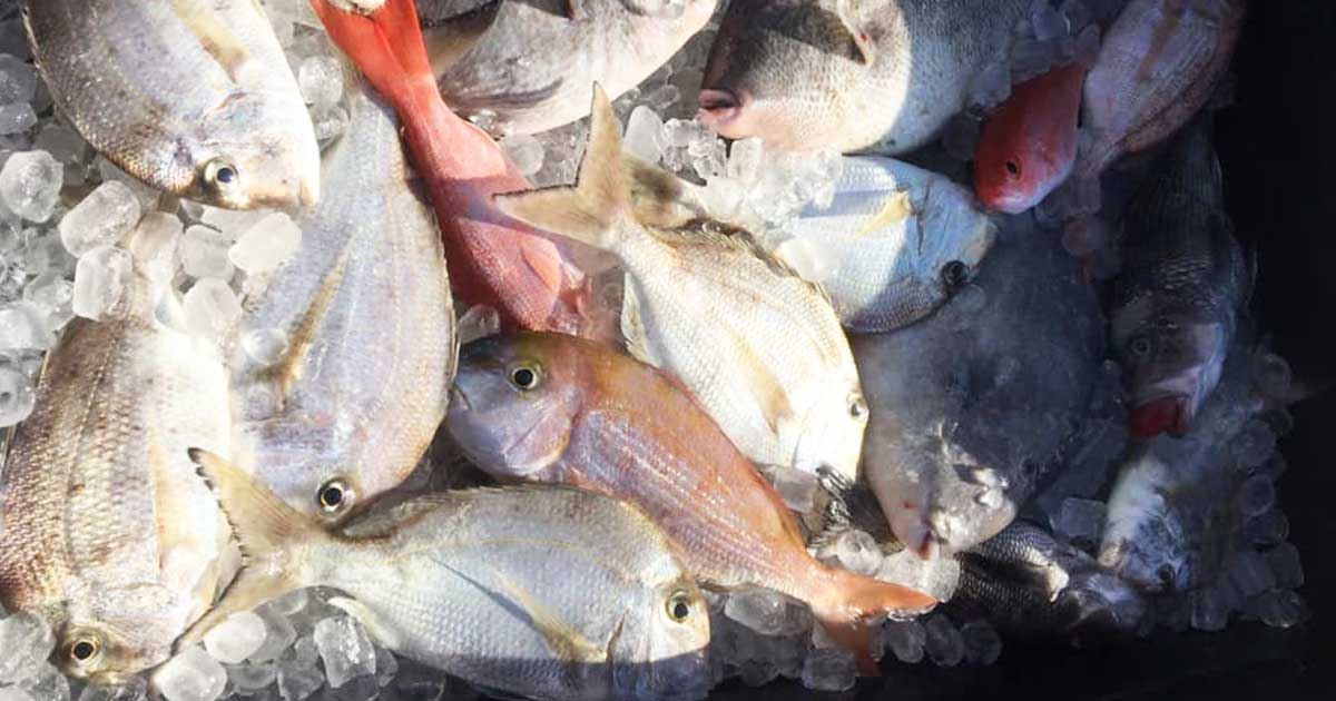 canaveral offshore fishing report