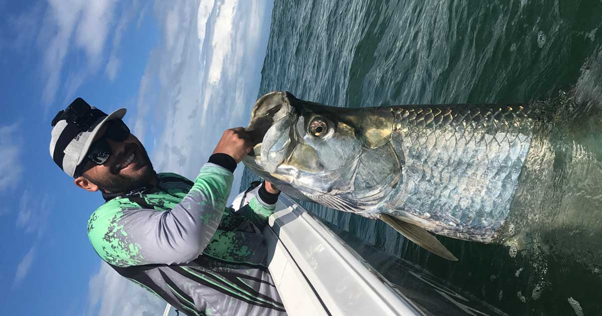 big tarpon fall mullet run